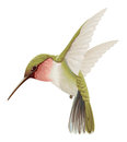 Green hummingbird illustration of flying Stock Photo