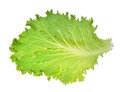 Green Iceberg lettuce leaf Royalty Free Stock Photo