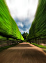 Green idyllic tree alley park motion abstract Royalty Free Stock Photo