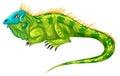 Green iguana crawling alone Royalty Free Stock Photo
