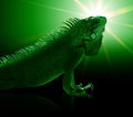 Green iguana portrait of a in toned mystic artificial ambiance Royalty Free Stock Photo