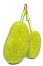 The green jackfruits on white background Stock Images
