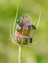 Green June Bugs Royalty Free Stock Photo