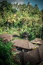 Green jungle on Bali island, Indonesia. Tropical rainforest scene. Royalty Free Stock Photo