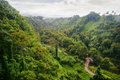 Green jungle of Hawaii Royalty Free Stock Photo