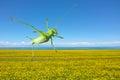Green katydid a jumps over the rape field Stock Photo