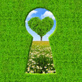 Green keyhole on the background tree in the shape of heart Royalty Free Stock Images