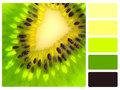 Green kiwi colour palette swatch with complimentary swatches Stock Images