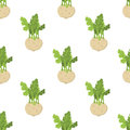Green kohlrabi seamless pattern, type of cabbage. Fresh organic vegetable