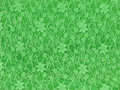 Green lace fabric textile texture Stock Image