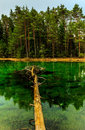 Green lake photo taken in estonia Royalty Free Stock Photography