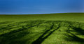 Green landscape blue sky trees Royalty Free Stock Photo