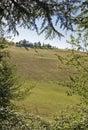 Green landscape scenary italy europe Royalty Free Stock Photos