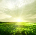Green landscape summer with beautiful sky Stock Images