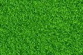 Green lawn, Grass. Pattern texture repeating seamless. Royalty Free Stock Photo