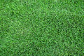 Green lawn,Greensward for background. Royalty Free Stock Photo
