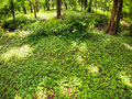 The green lawn in a park in the shade of trees Royalty Free Stock Photo