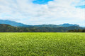 Green lawn sky and mountain. Royalty Free Stock Photo