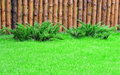A green lawn with two bushes of juniper and wooden fence Stock Photo
