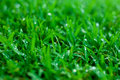 Green lawn with water droplets close up of wet Royalty Free Stock Photography