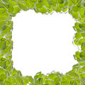 Green leaf. Royalty Free Stock Photos