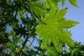 Green leaf Στοκ Φωτογραφίες