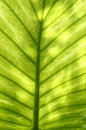 Green leaf abstract pattern Stock Image
