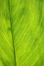Green leaf as background closeup of fresh Royalty Free Stock Photography
