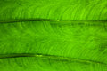 Green leaf background on a Stock Photos