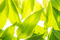 Green leaf  background Stock Photography
