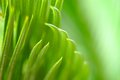 Green leaf background abstract palm soft focused Stock Image