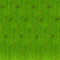Green leaf background or nature Stock Image