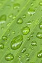 Green leaf background with raindrops Stock Photography