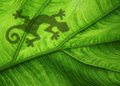 Green leaf background with shadow of a gecko Royalty Free Stock Images