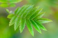 Green leaf background shallow depth of field Royalty Free Stock Photos