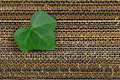 Green leaf on cardboard background Stock Image