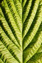 Green leaf closeup Royalty Free Stock Photos