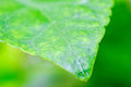 Green leaf closeup of background Royalty Free Stock Photos