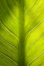 Green leaf closeup texture Royalty Free Stock Photo