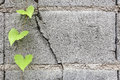 Green leaf on concrete blocks Royalty Free Stock Photo