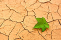 Green leaf on cracked ground Stock Photo