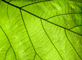 Green leaf details Royalty Free Stock Photos