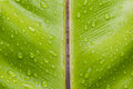 Green leaf with dew Royalty Free Stock Photo