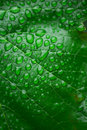 Green leaf and dew close up background Stock Image