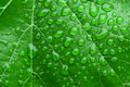 Green leaf and dew close up background Stock Photography