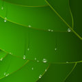 Green leaf with drops of water Stock Photos