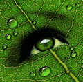 Green leaf eye dewdrops Stock Photography
