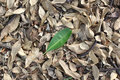 Green leaf on fallen dry leaves laying on the ground Royalty Free Stock Photo