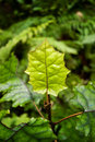 Green Leaf in Forest Stock Photography