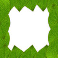 Green leaf frame or border Stock Photography